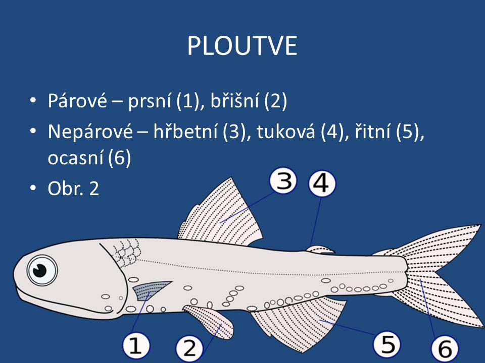 PLOUTVE Párové – prsní (1), břišní (2) Nepárové – hřbetní (3), tuková (4), řitní (5), ocasní (6) Obr. 2