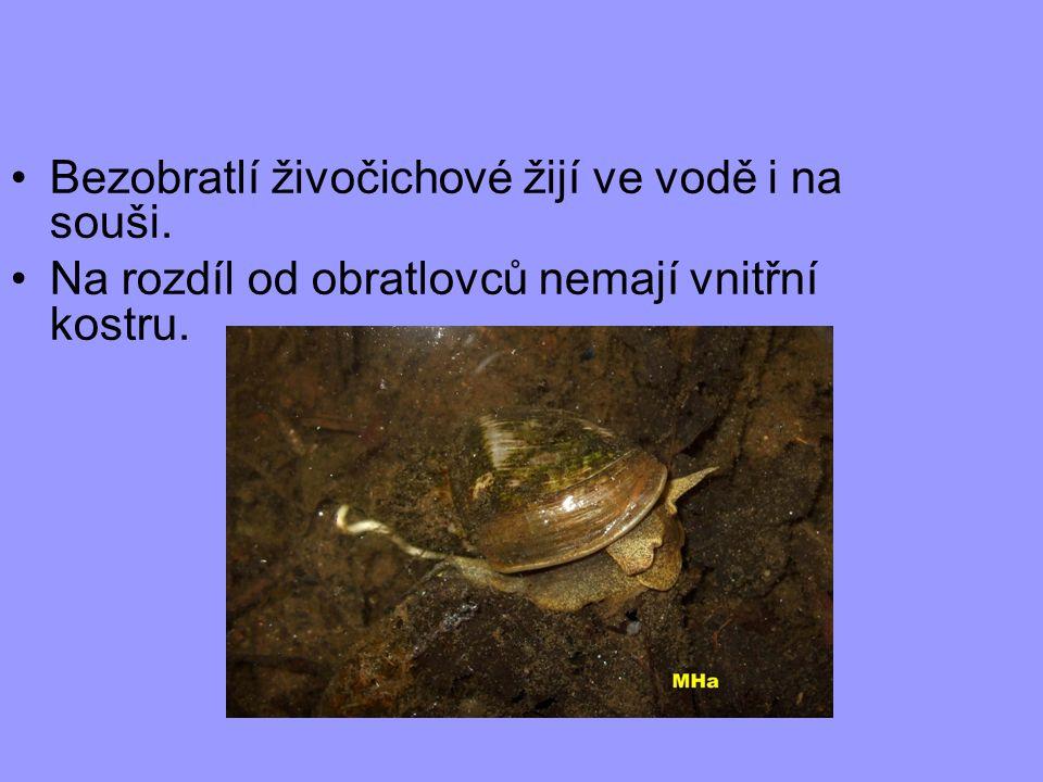 Bezobratlí živočichové žijí ve vodě i na souši. Na rozdíl od obratlovců nemají vnitřní kostru.