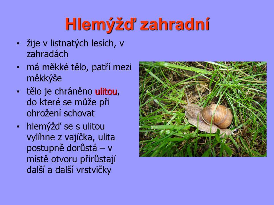Hlemýžď zahradní žije v listnatých lesích, v zahradách má měkké tělo, patří mezi měkkýše ulitou tělo je chráněno ulitou, do které se může při ohrožení