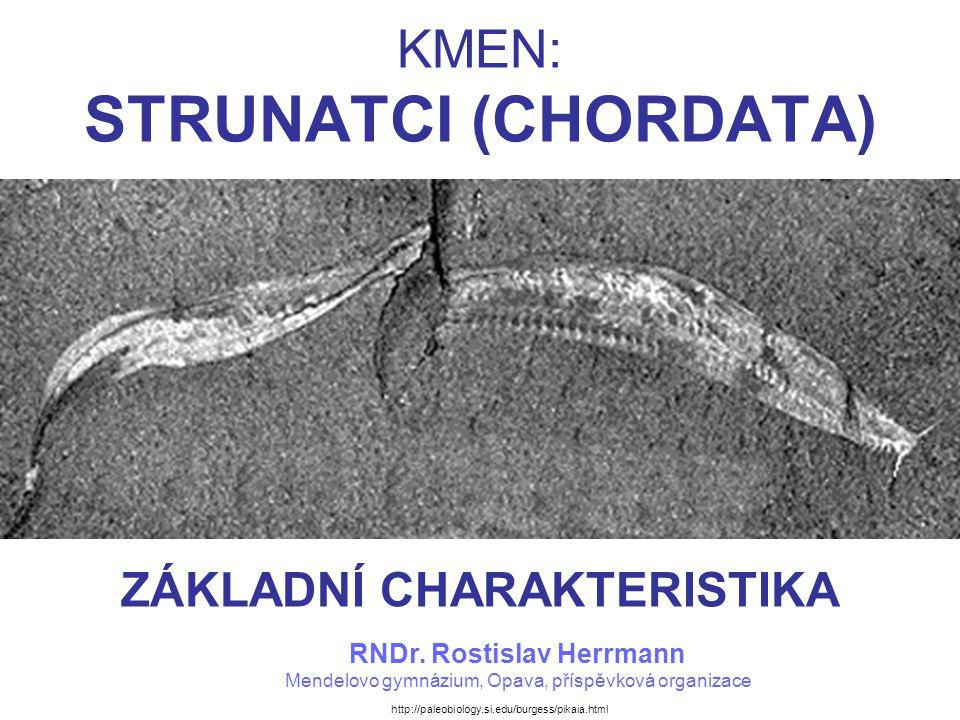 STRUNATCI V SYSTÉMU DRUHOÚSTÝCH Kmen: Ostnokožci (Echinodermata)Ostnokožci –třída: Lilijice (Crinoidea)Lilijice –třída: Hvězdice (Asteroidea)Hvězdice –třída: Hadice (Ophiuroidea)Hadice –třída: Ježovky (Echinoidea)Ježovky –třída: Sumýši (Holothuroidea)Sumýši Kmen: Polostrunatci (Hemichordata)Polostrunatci –třída: Křídložábří (Pterobranchia)Křídložábří –třída: Žaludovci (Enteropneusta)Žaludovci Kmen: Strunatci (Chordata)Strunatci –Podkmen: Pláštěnci (Urochordata)Pláštěnci třída: Sumky (Ascidiacea)Sumky třída: Salpy (Thaliacea)Salpy třída: Vršenky (Appendicularia)Vršenky –Podkmen: Bezlebeční (Cephalochordata, Acrania)Bezlebeční –Podkmen: Obratlovci (Vertebrata)Obratlovci Nadtřída: Bezčelistnatci (Agnatha)Bezčelistnatci –třída: Sliznatky (Myxini)Sliznatky –třída: Mihule (Cephalaspidomorphi)Mihule Nadtřída: Čelistnatci (Gnathostomata)Čelistnatci –třída: Paryby (Chodrichthyes)Paryby –třída: Nozdratí (Sarcopterygii)Nozdratí –třída: Paprskoploutví (Actynopterygii)Paprskoploutví –třída: Obojživelníci (Amphibia)Obojživelníci –třída: Plazi (Reptilia)Plazi –třída: Ptáci (Aves)Ptáci –třída: Savci (Mammalia)Savci TRADIČNÍ SYSTÉM