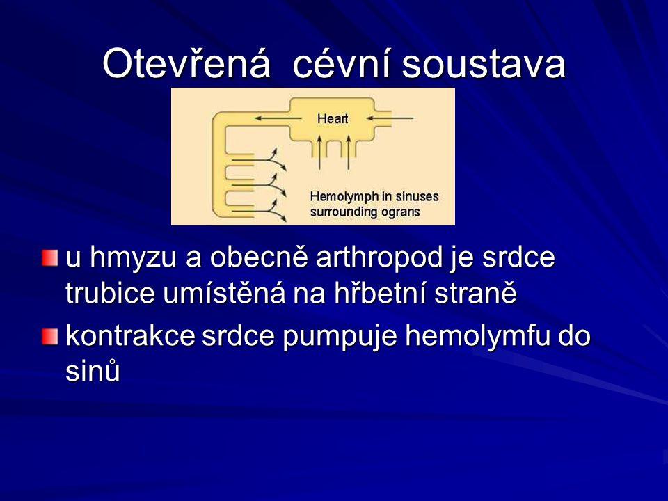 Otevřená cévní soustava u hmyzu a obecně arthropod je srdce trubice umístěná na hřbetní straně kontrakce srdce pumpuje hemolymfu do sinů