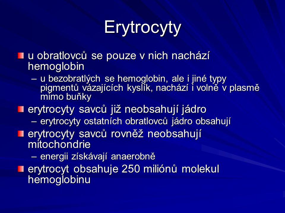 Erytrocyty u obratlovců se pouze v nich nachází hemoglobin –u bezobratlých se hemoglobin, ale i jiné typy pigmentů vázajících kyslík, nachází i volně