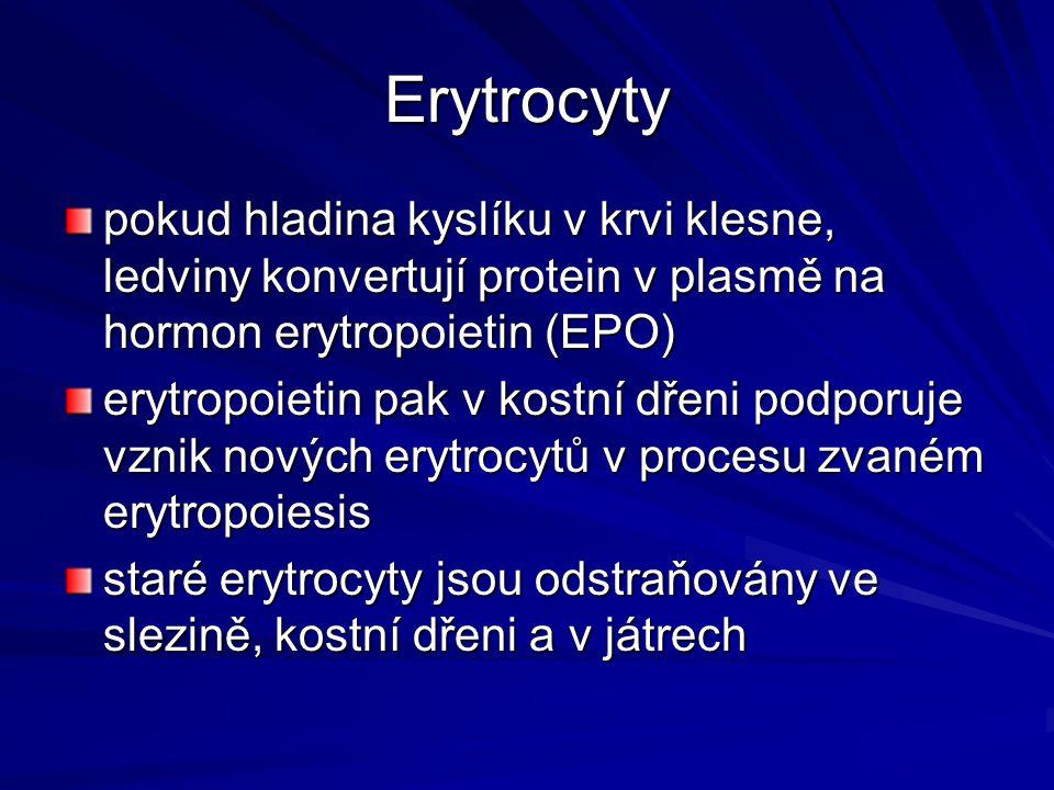 Erytrocyty pokud hladina kyslíku v krvi klesne, ledviny konvertují protein v plasmě na hormon erytropoietin (EPO) erytropoietin pak v kostní dřeni pod