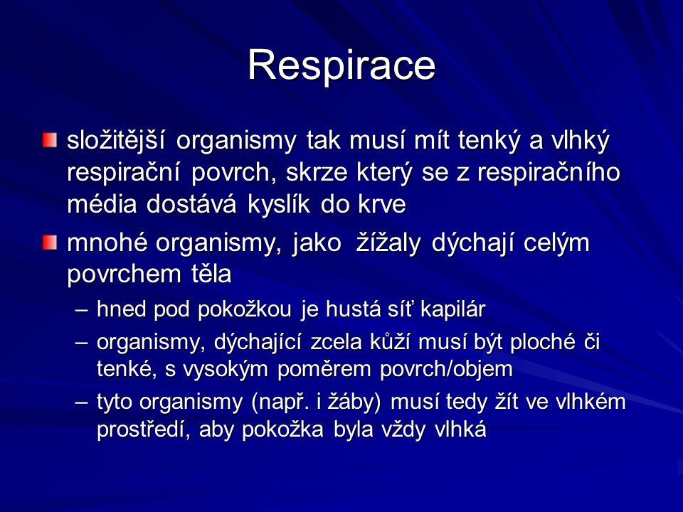 Respirace složitější organismy tak musí mít tenký a vlhký respirační povrch, skrze který se z respiračního média dostává kyslík do krve mnohé organism