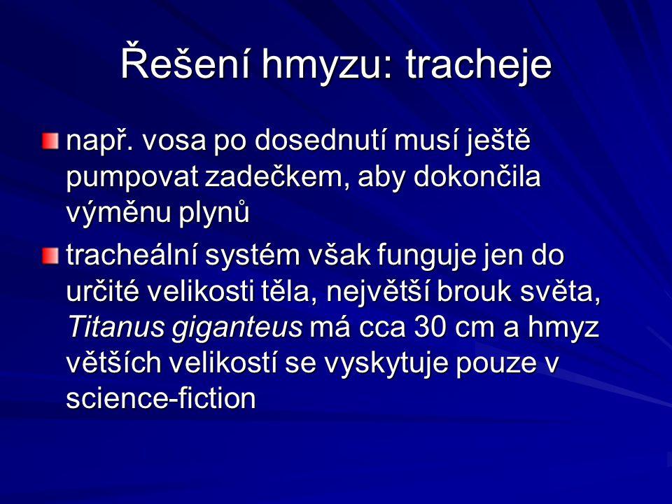 Řešení hmyzu: tracheje např. vosa po dosednutí musí ještě pumpovat zadečkem, aby dokončila výměnu plynů tracheální systém však funguje jen do určité v