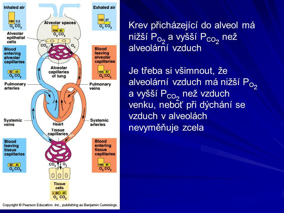 Krev přicházející do alveol má nižší P O 2 a vyšší P CO 2 než alveolární vzduch Je třeba si všimnout, že alveolární vzduch má nižší P O 2 a vyšší P CO