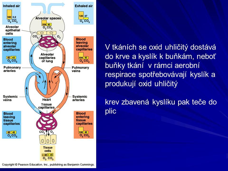 V tkáních se oxid uhličitý dostává do krve a kyslík k buňkám, neboť buňky tkání v rámci aerobní respirace spotřebovávají kyslík a produkují oxid uhlič