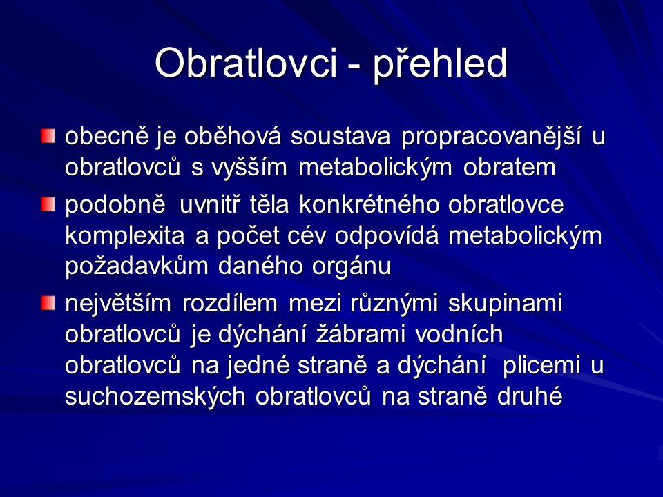 Obratlovci - přehled obecně je oběhová soustava propracovanější u obratlovců s vyšším metabolickým obratem podobně uvnitř těla konkrétného obratlovce