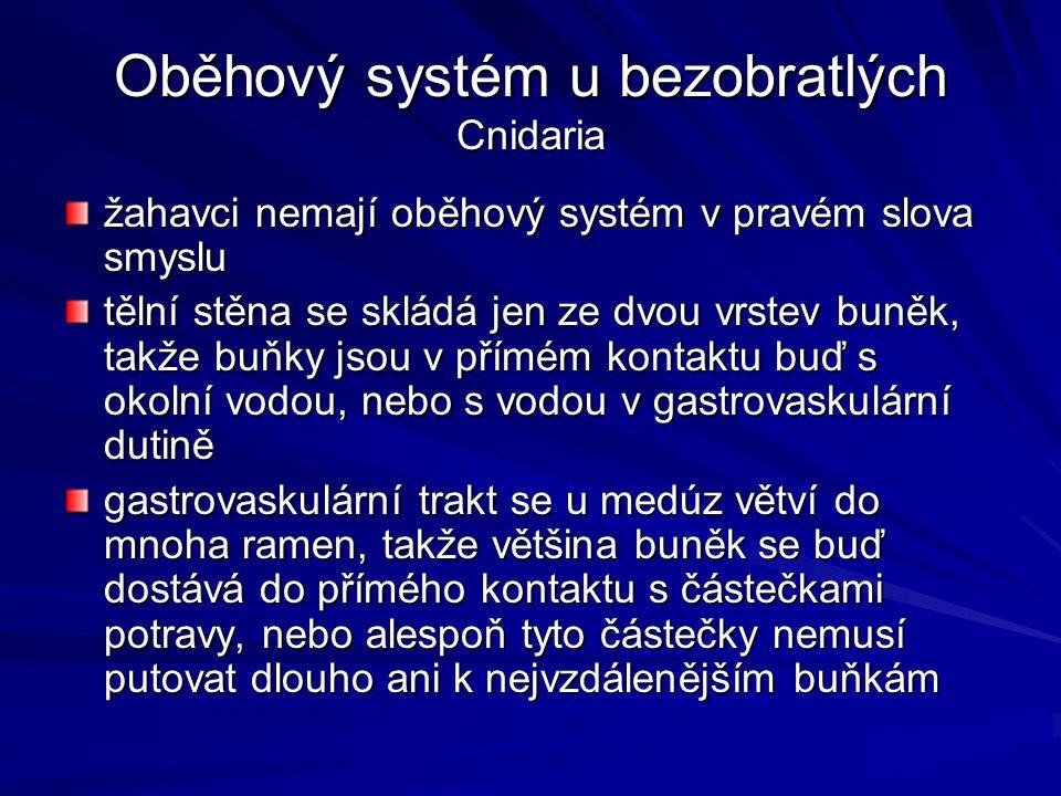Oběhový systém u bezobratlých Cnidaria žahavci nemají oběhový systém v pravém slova smyslu tělní stěna se skládá jen ze dvou vrstev buněk, takže buňky