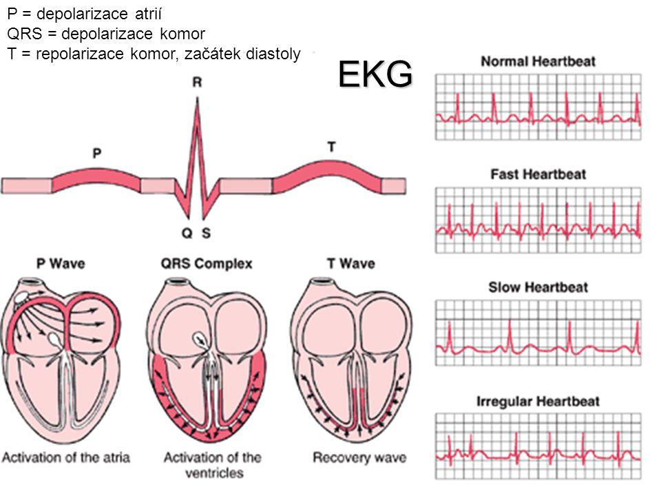 EKG P = depolarizace atrií QRS = depolarizace komor T = repolarizace komor, začátek diastoly