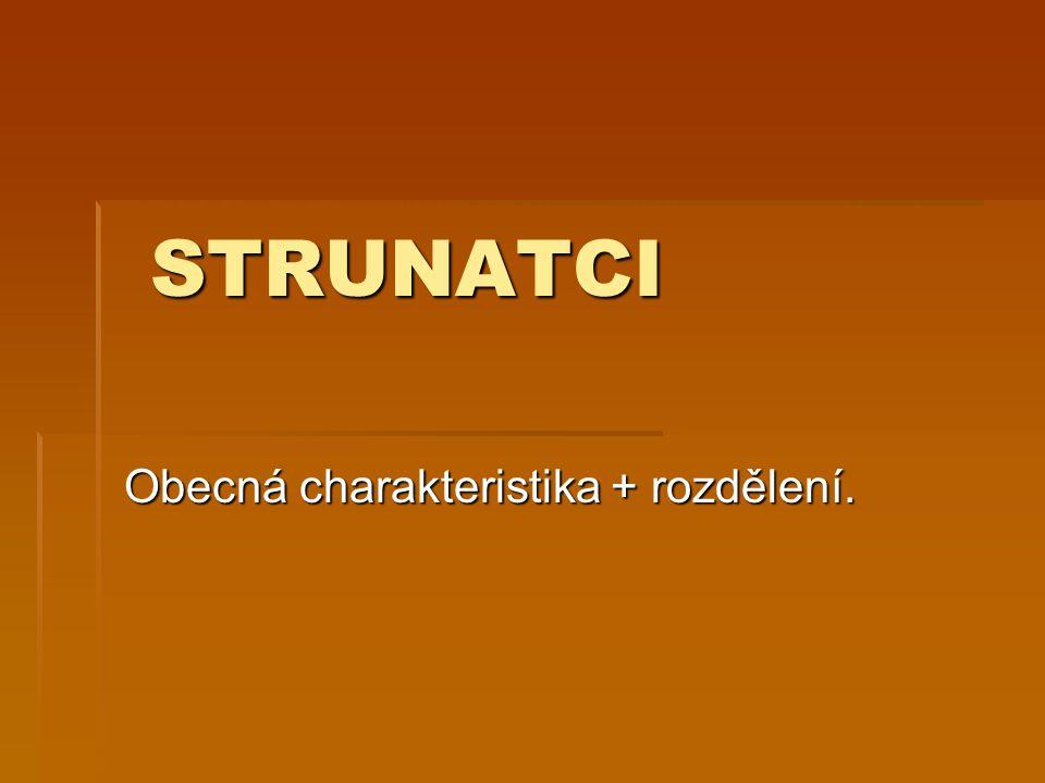 STRUNATCI STRUNATCI Obecná charakteristika + rozdělení.