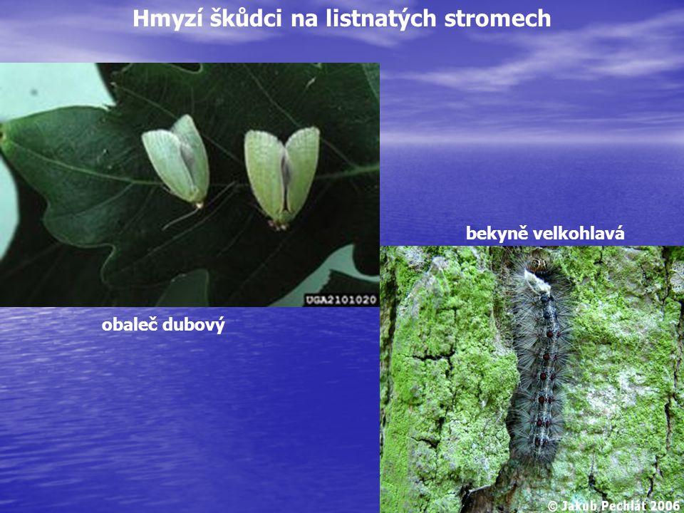 bekyně velkohlavá obaleč dubový Hmyzí škůdci na listnatých stromech