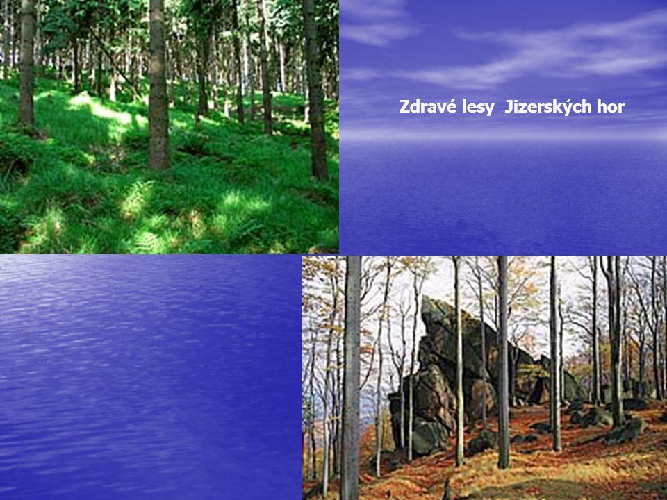 Zdravé lesy Jizerských hor