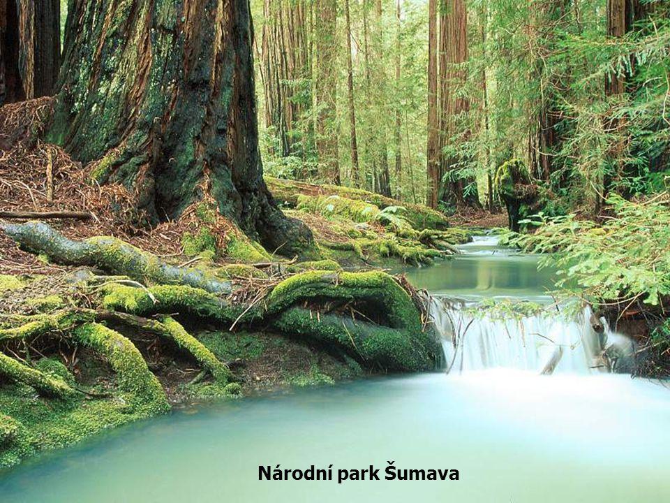 C) Ochrana lesa před škodlivým působením vyšších obratlovců V lese žijící zvěř srstnatá i pernatá způsobuje přímé i nepřímé škody, které se liší podle druhu zvěře, ale i druhu dřevin.