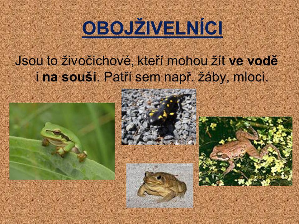 OBOJŽIVELNÍCI Jsou to živočichové, kteří mohou žít ve vodě i na souši. Patří sem např. žáby, mloci.