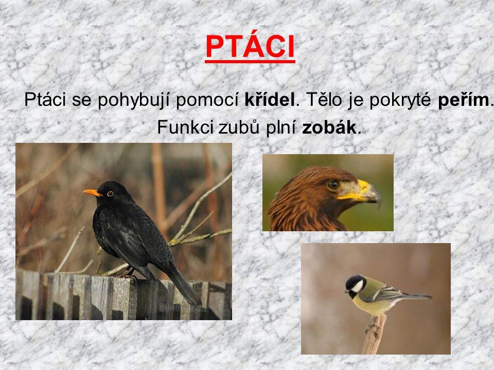 PTÁCI Ptáci se pohybují pomocí křídel. Tělo je pokryté peřím. Funkci zubů plní zobák.