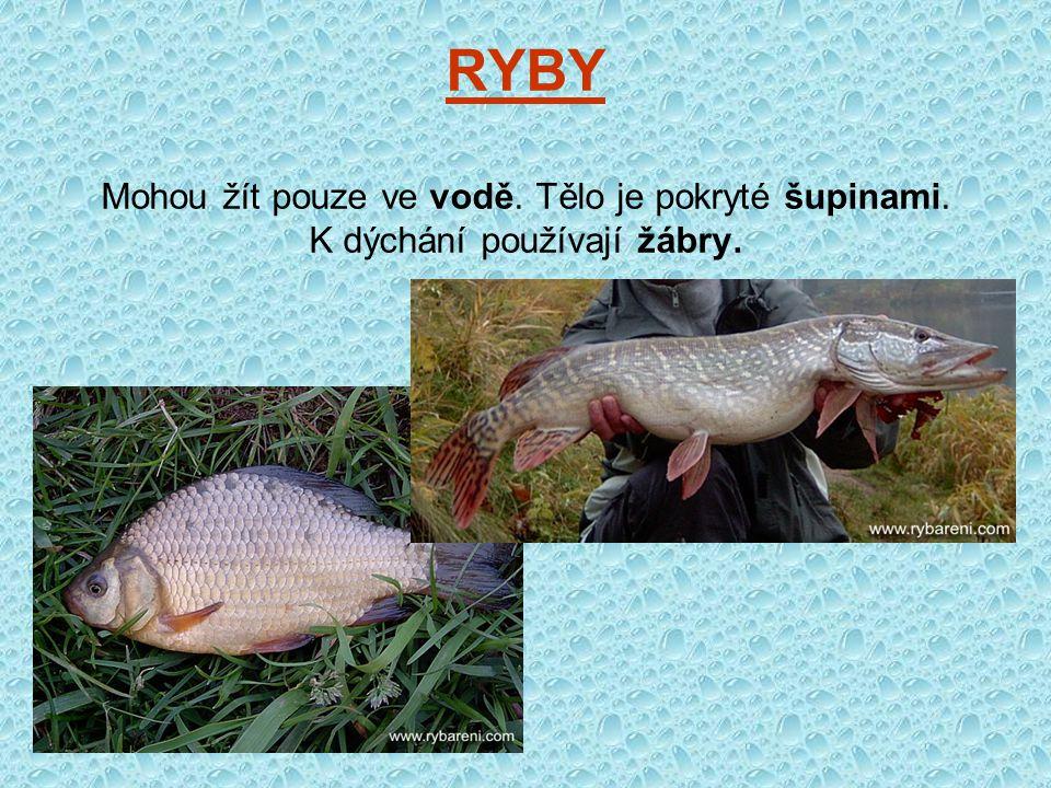 RYBY Mohou žít pouze ve vodě. Tělo je pokryté šupinami. K dýchání používají žábry.