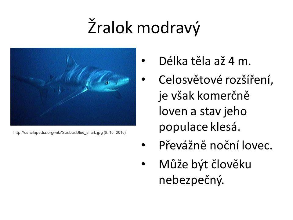 Žralok modravý Délka těla až 4 m. Celosvětové rozšíření, je však komerčně loven a stav jeho populace klesá. Převážně noční lovec. Může být člověku neb