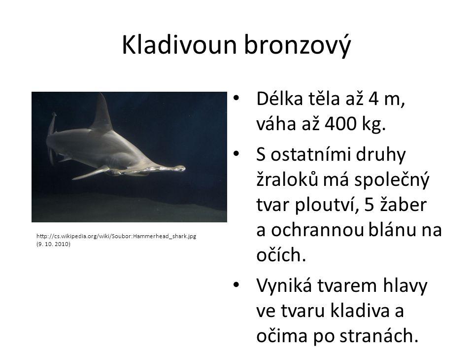 Kladivoun bronzový Délka těla až 4 m, váha až 400 kg. S ostatními druhy žraloků má společný tvar ploutví, 5 žaber a ochrannou blánu na očích. Vyniká t