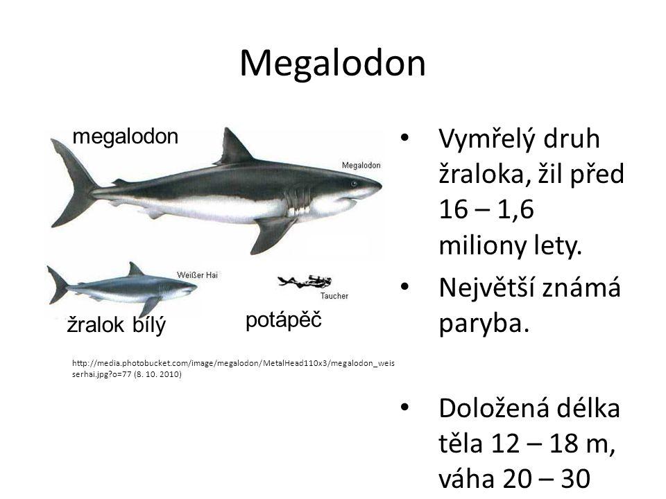 Megalodon Vymřelý druh žraloka, žil před 16 – 1,6 miliony lety. Největší známá paryba. Doložená délka těla 12 – 18 m, váha 20 – 30 tun. http://media.p