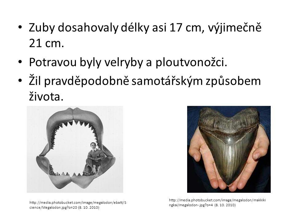 Zuby dosahovaly délky asi 17 cm, výjimečně 21 cm. Potravou byly velryby a ploutvonožci. Žil pravděpodobně samotářským způsobem života. http://media.ph