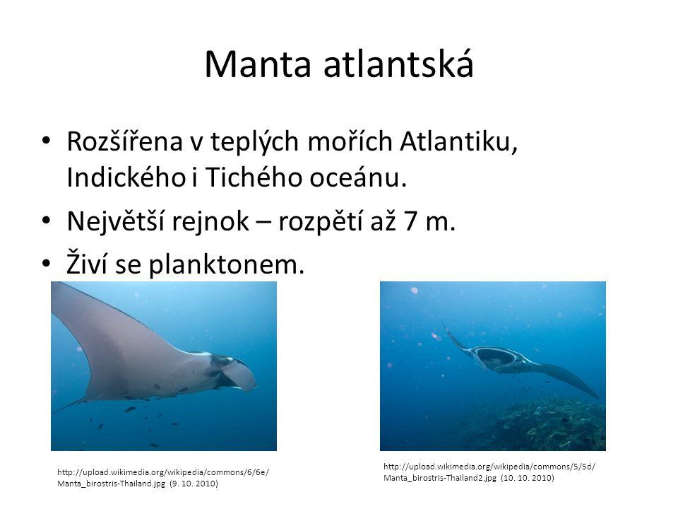 Manta atlantská Rozšířena v teplých mořích Atlantiku, Indického i Tichého oceánu. Největší rejnok – rozpětí až 7 m. Živí se planktonem. http://upload.