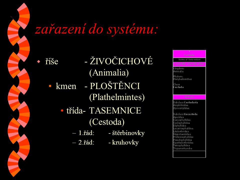 zařazení do systému: w říše- ŽIVOČICHOVÉ (Animalia) kmen- PLOŠTĚNCI (Plathelmintes) třída- TASEMNICE (Cestoda) –1.řád:- štěrbinovky –2.řád:- kruhovky