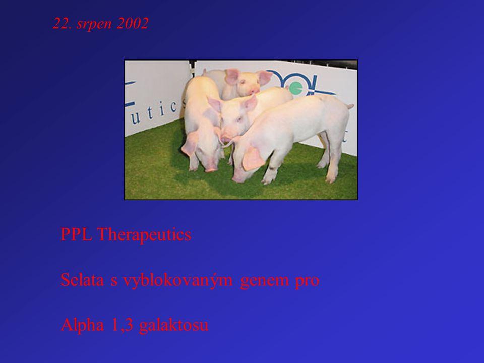 22. srpen 2002 PPL Therapeutics Selata s vyblokovaným genem pro Alpha 1,3 galaktosu