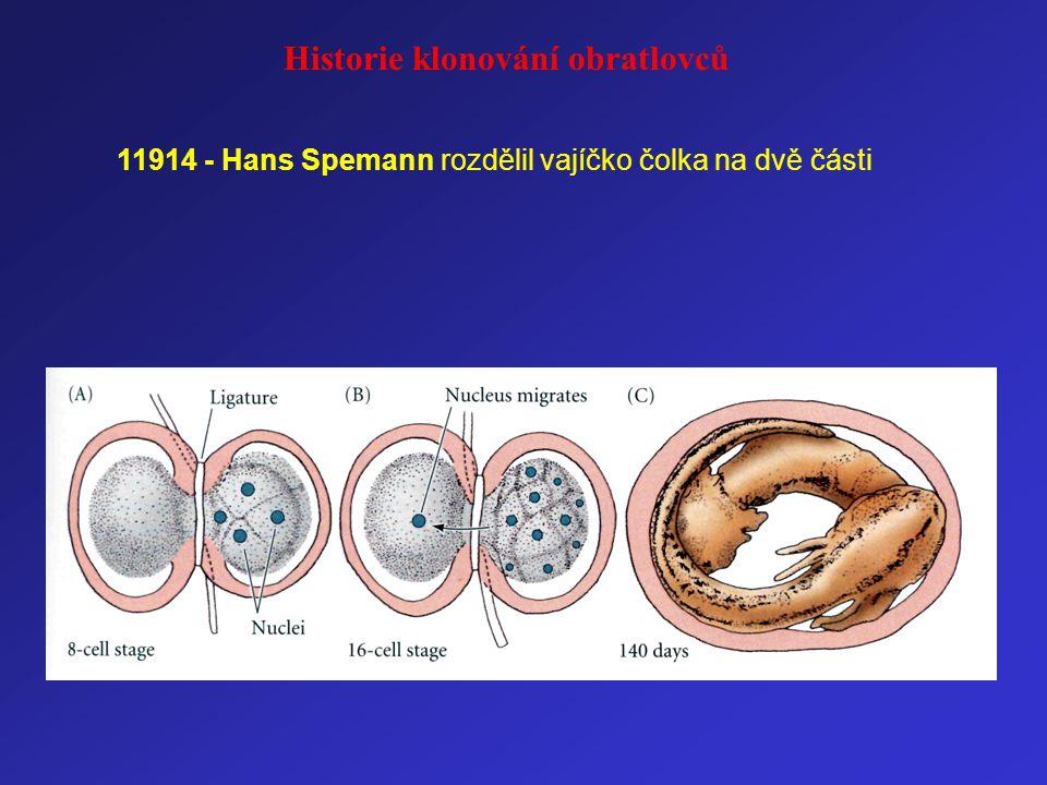 11914 - Hans Spemann rozdělil vajíčko čolka na dvě části Historie klonování obratlovců