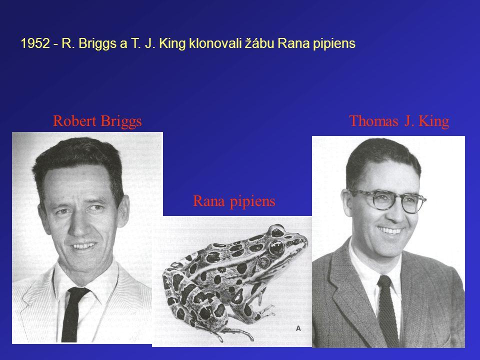 Robert BriggsThomas J. King Rana pipiens 1952 - R. Briggs a T. J. King klonovali žábu Rana pipiens