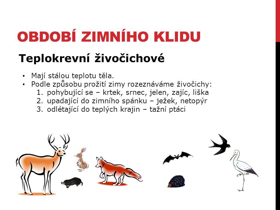 OBDOBÍ ZIMNÍHO KLIDU Teplokrevní živočichové Mají stálou teplotu těla. Podle způsobu prožití zimy rozeznáváme živočichy: 1.pohybující se – krtek, srne