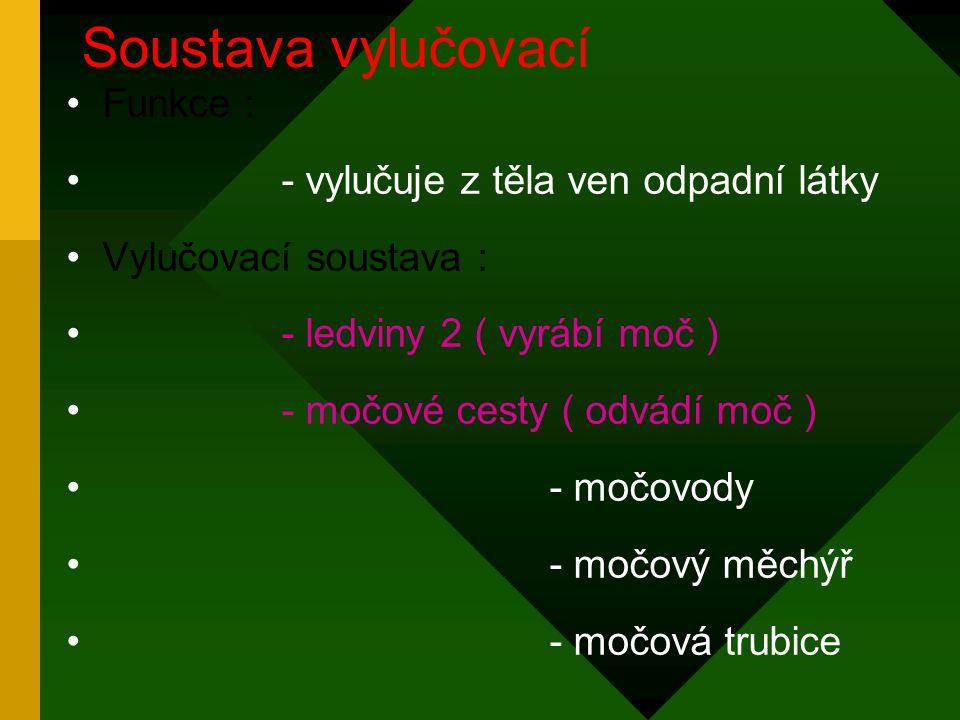 Funkce : - vylučuje z těla ven odpadní látky Vylučovací soustava : - ledviny 2 ( vyrábí moč ) - močové cesty ( odvádí moč ) - močovody - močový měchýř - močová trubice