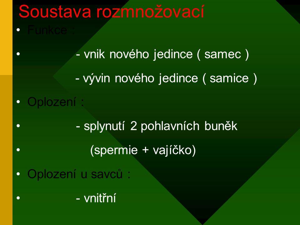 Funkce : - vnik nového jedince ( samec ) - vývin nového jedince ( samice ) Oplození : - splynutí 2 pohlavních buněk (spermie + vajíčko) Oplození u savců : - vnitřní