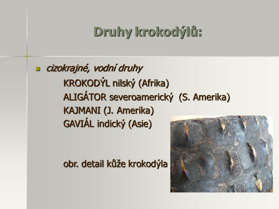 Druhy krokodýlů: cizokrajné, vodní druhy cizokrajné, vodní druhy KROKODÝL nilský (Afrika) ALIGÁTOR severoamerický (S. Amerika) KAJMANI (J. Amerika) GA