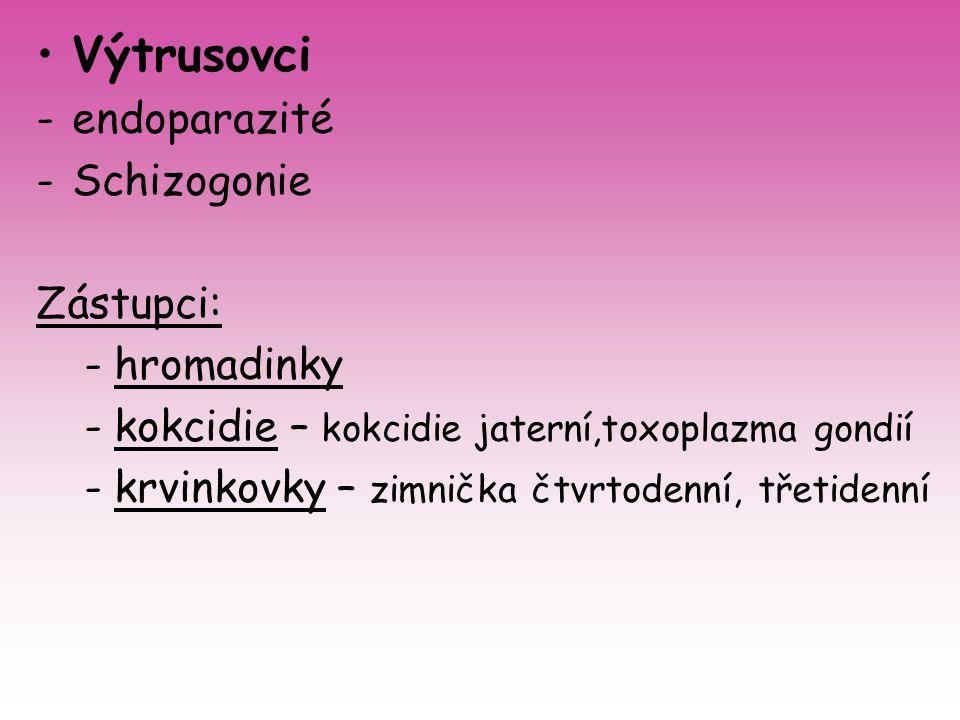 Výtrusovci -endoparazité -Schizogonie Zástupci: -hromadinky -kokcidie – kokcidie jaterní,toxoplazma gondií -krvinkovky – zimnička čtvrtodenní, třetide