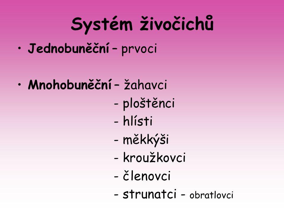 Systém živočichů Jednobuněční – prvoci Mnohobuněční – žahavci - ploštěnci - hlísti - měkkýši - kroužkovci - členovci - strunatci - obratlovci