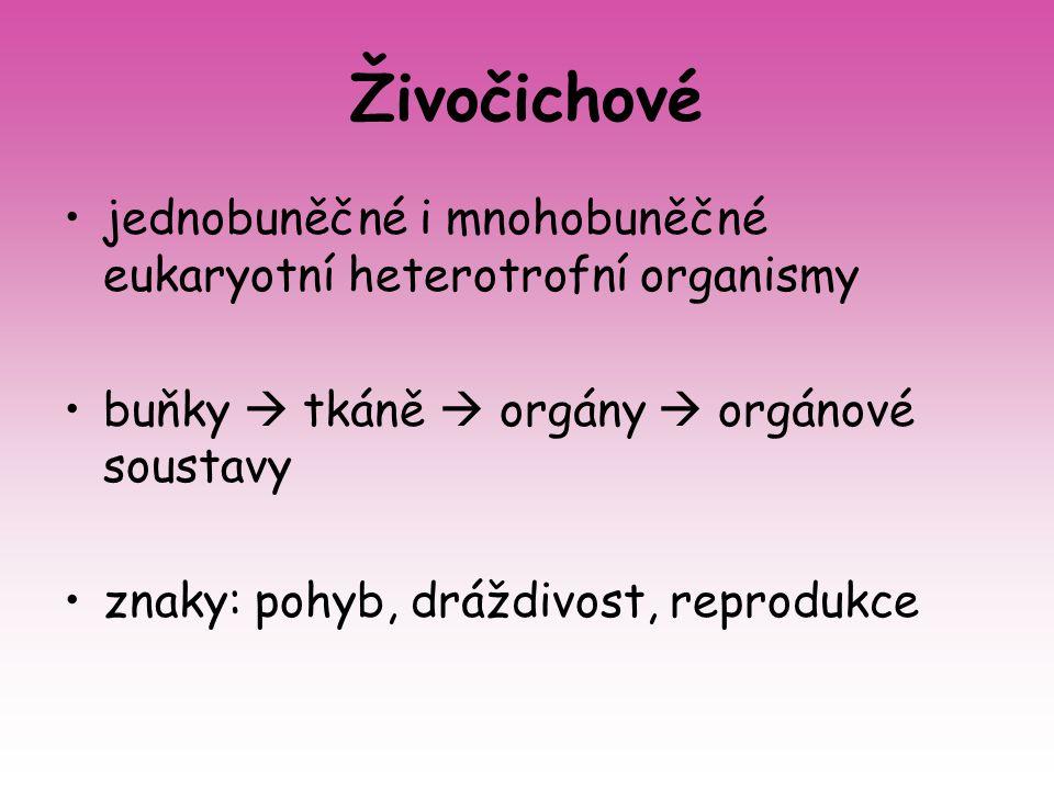 Živočichové jednobuněčné i mnohobuněčné eukaryotní heterotrofní organismy buňky  tkáně  orgány  orgánové soustavy znaky: pohyb, dráždivost, reprodu