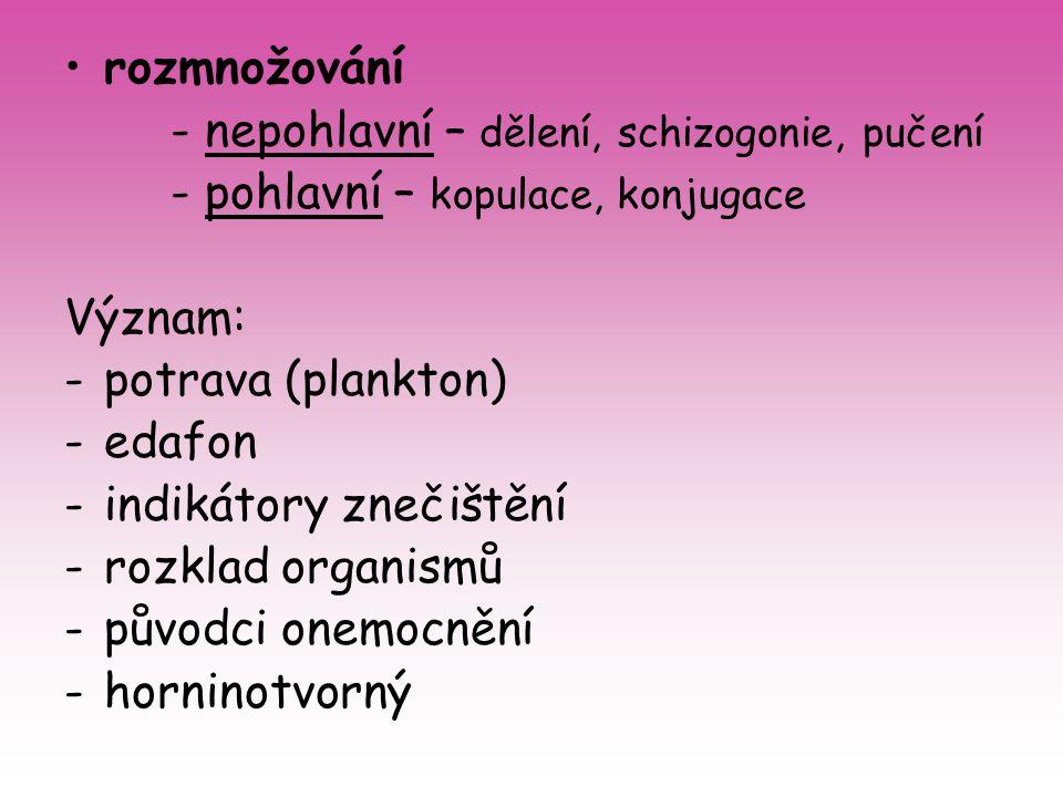 rozmnožování - nepohlavní – dělení, schizogonie, pučení - pohlavní – kopulace, konjugace Význam: -potrava (plankton) -edafon -indikátory znečištění -r