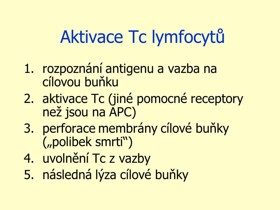 Aktivace Tc lymfocytů 1.rozpoznání antigenu a vazba na cílovou buňku 2.aktivace Tc (jiné pomocné receptory než jsou na APC) 3.perforace membrány cílov