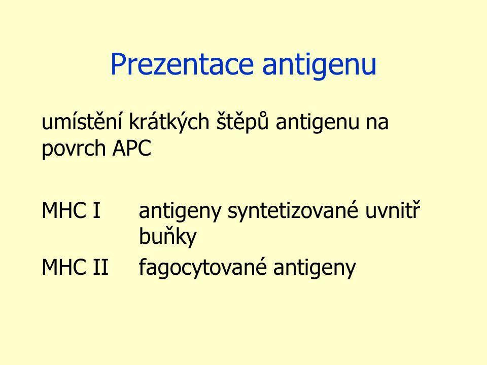 Prezentace antigenu umístění krátkých štěpů antigenu na povrch APC MHC I antigeny syntetizované uvnitř buňky MHC IIfagocytované antigeny