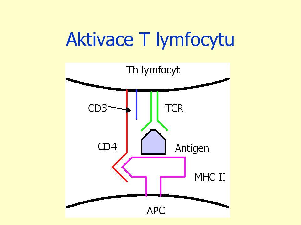 Aktivace T lymfocytu