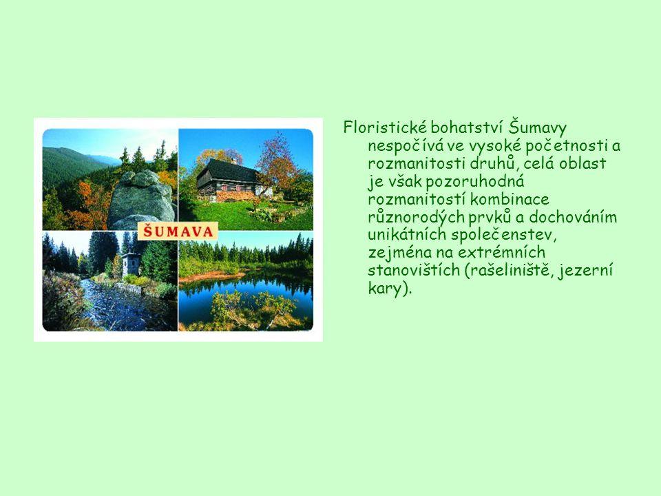 Floristické bohatství Šumavy nespočívá ve vysoké početnosti a rozmanitosti druhů, celá oblast je však pozoruhodná rozmanitostí kombinace různorodých prvků a dochováním unikátních společenstev, zejména na extrémních stanovištích (rašeliniště, jezerní kary).