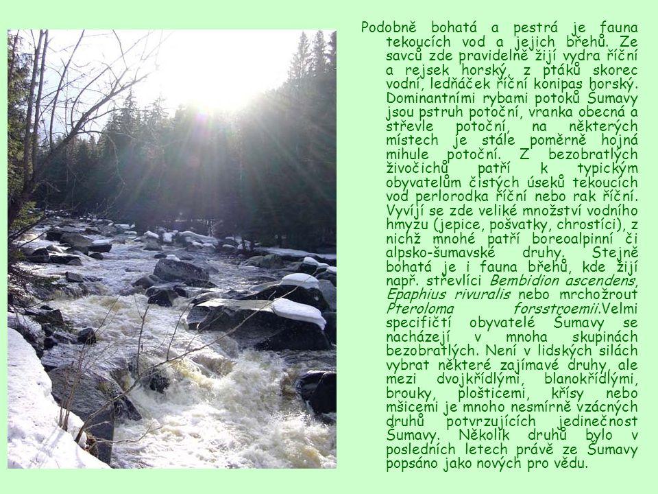 Podobně bohatá a pestrá je fauna tekoucích vod a jejich břehů. Ze savců zde pravidelně žijí vydra říční a rejsek horský, z ptáků skorec vodní, ledňáče