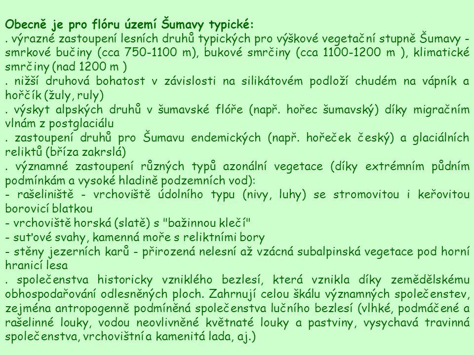 Obecně je pro flóru území Šumavy typické:. výrazné zastoupení lesních druhů typických pro výškové vegetační stupně Šumavy - smrkové bučiny (cca 750-11