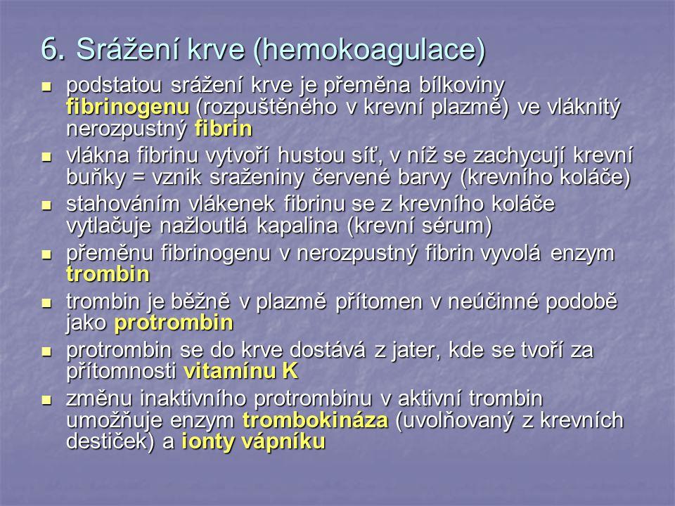 6. Srážení krve (hemokoagulace) podstatou srážení krve je přeměna bílkoviny fibrinogenu (rozpuštěného v krevní plazmě) ve vláknitý nerozpustný fibrin