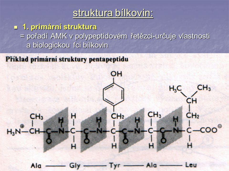 struktura bílkovin: 1. primární struktura 1. primární struktura = pořadí AMK v polypeptidovém řetězci-určuje vlastnosti = pořadí AMK v polypeptidovém