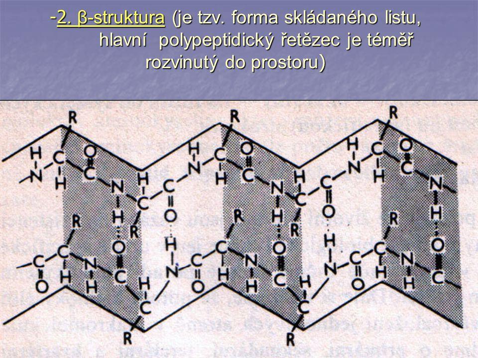 -2. β-struktura (je tzv. forma skládaného listu, hlavní polypeptidický řetězec je téměř rozvinutý do prostoru )