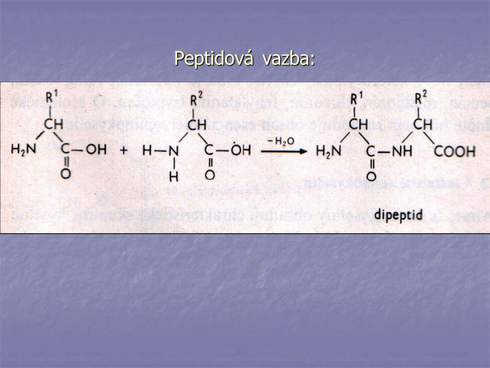 - albuminy (jsou rozpustné ve vodě; jsou v krevním séru, mléku, vaječném bílku, protilátky, účastní se na stavbě živočich.