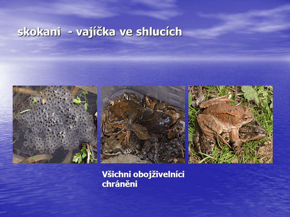 skokani - vajíčka ve shlucích Všichni obojživelníci chráněni