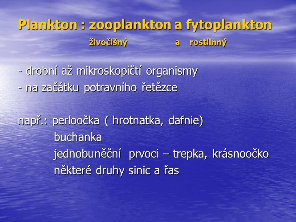 Plankton : zooplankton a fytoplankton živočišný a rostlinný - drobní až mikroskopičtí organismy - na začátku potravního řetězce např.: perloočka ( hro